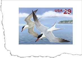 2011 Common Terns Stamped Card