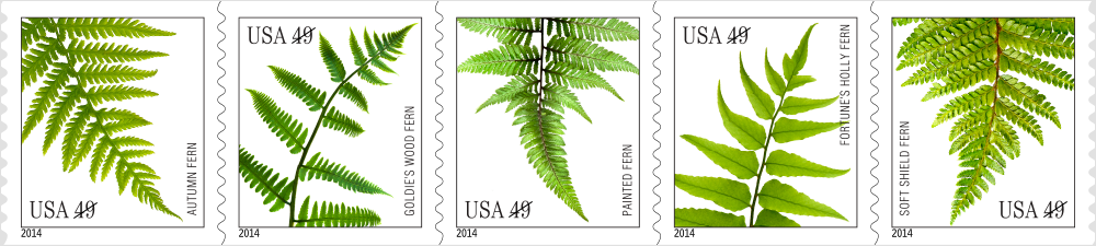 click to see 5 fern designs