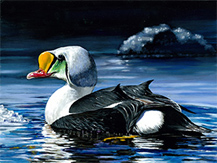 Junior Duck Stamp Contest winning art by Si youn Kim.
