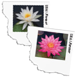 USPS Water Lilies Stamped Envelopes 2015