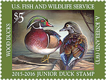 U. S. Department of the Interior, Junior Duck Stamp