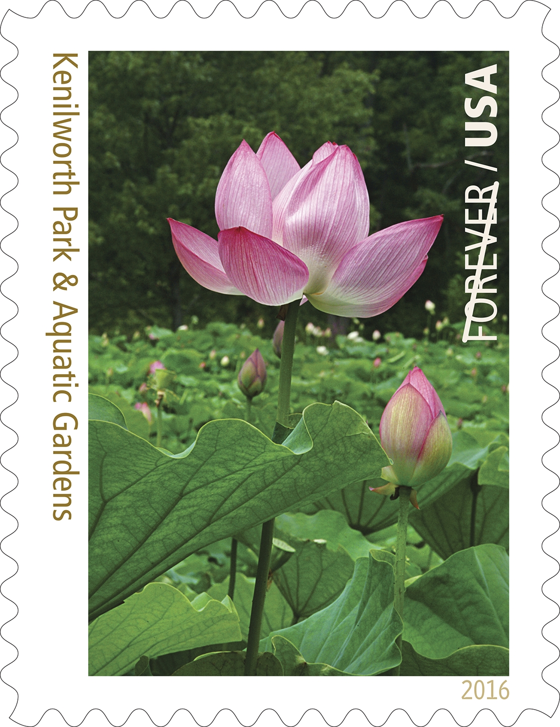usps new stamp issues 2016 forever stamps stamp news now